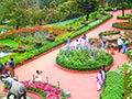 Attraction in ooty